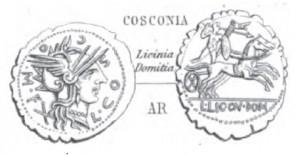 Denier Serratus Cosconia